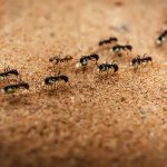 Home Invasion – A Bug Story