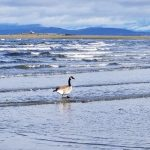 Birdwatching in Parksville